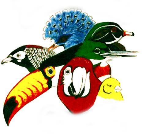 Foothill Bird Fanciers Club  #parrots #parrot #petbirds #companionparrot #birdclub