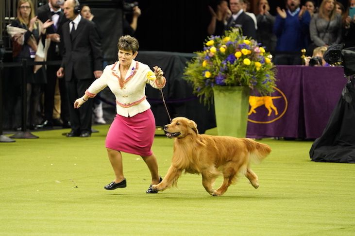 Relive The Action Top Dogs Compete For Westminster Best In Show