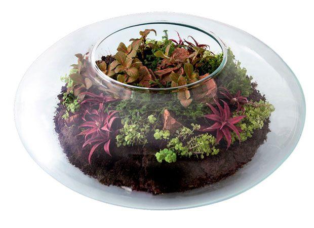 mini jardins em vidro: mini jardins em vidro by super ziper pinned from superziper com