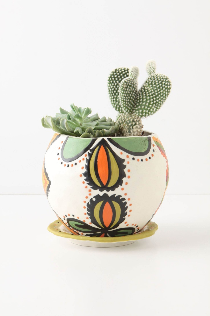 want a cactus. maybe it wont die like all my other plants