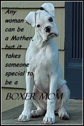 """Click visit site and Check out Best """"Boxer"""" T-shirts. This website is excellent. Tip: You can search """"your name"""" or """"your favorite shirts"""" at search bar on the top."""