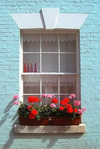 Geraniums in window boxes.