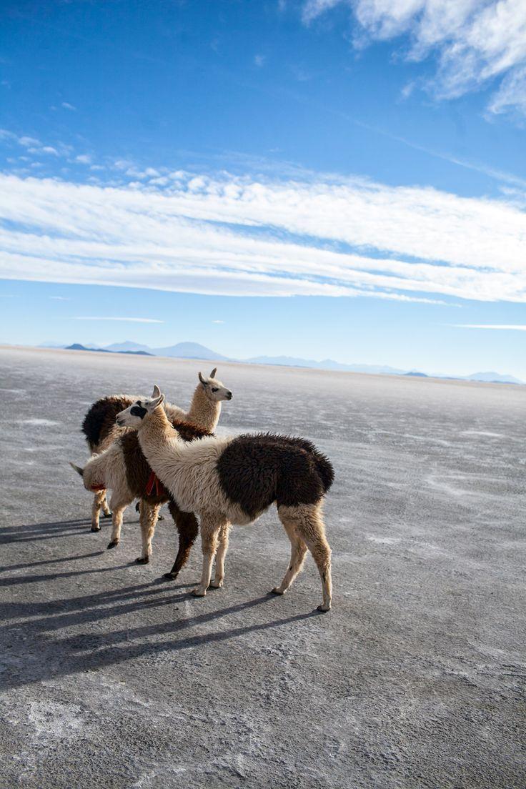 Salar de Uyuni 3 Day Salt Flat Tour