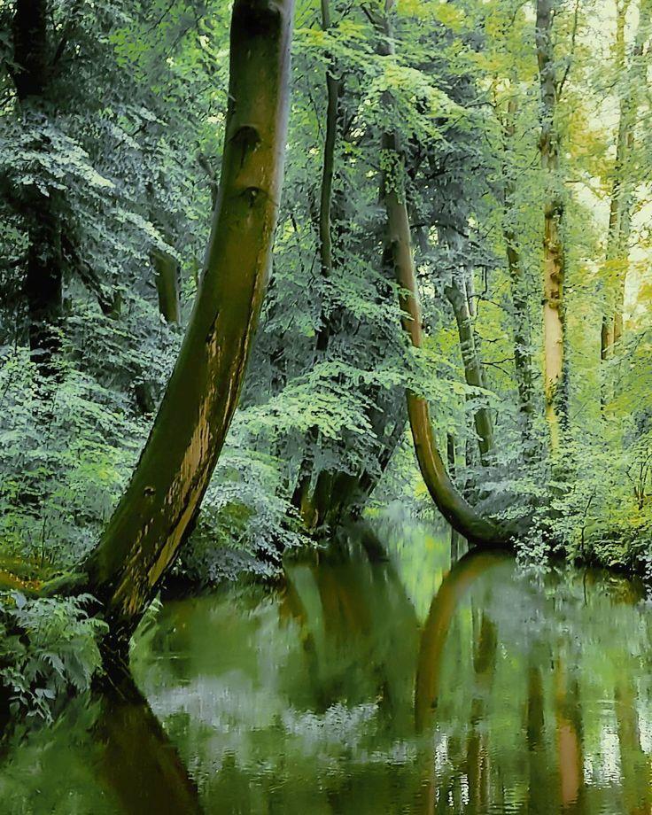 ~ Green reflect ~