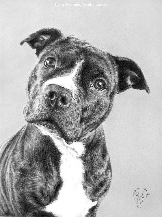 Looks Like My Boxer Pit Mix Dog Drawing Animal