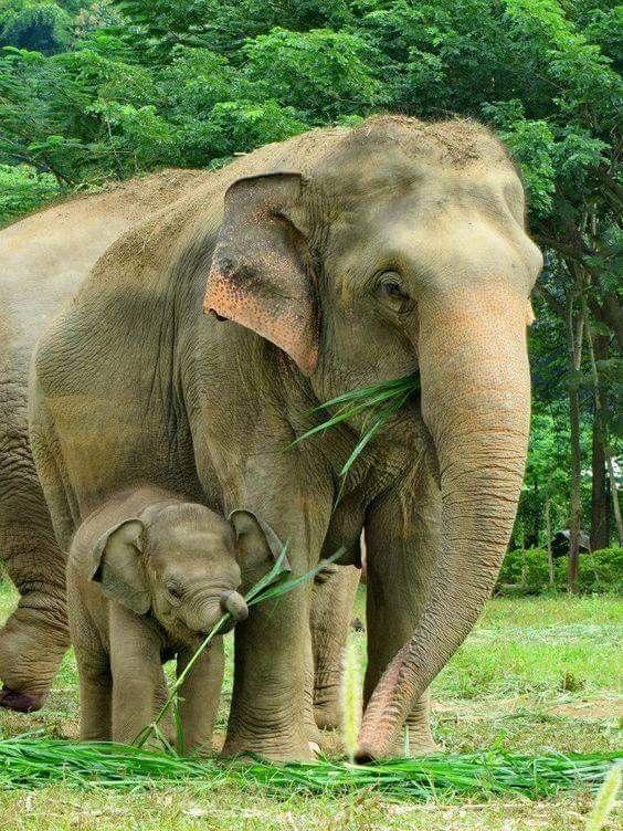 I love ♥️ elephants. We must  protect them.