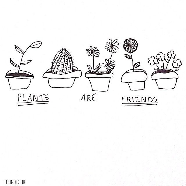 "@imagine.soul's photo: ""+ 'PLANTS ARE FRIENDS' - This is just a very simple drawing that I have seen all over instagram and tumblr! I know it's not very detailed but it's just to start off with! Please repost with credit There will be more drawings coming soon!"" More"