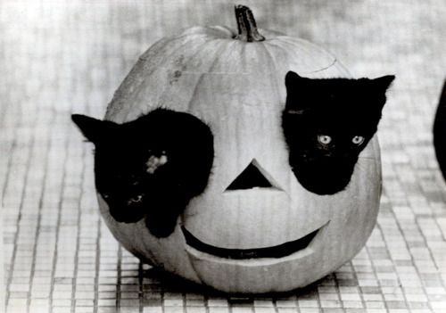 I love this photo because of its playfulness, humor and silliness. Not to mention, how the word cute flows from it. The two black cats in the pumpkin, the subject of the photo, have great contrast between the tiles in the background and the pumpkins. A very beautiful photo!