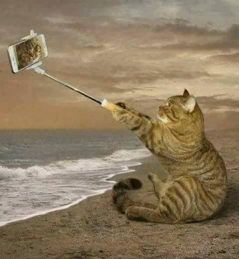 Посетите сайт о кошках http://depo13.com.ua/otdyx/koshki