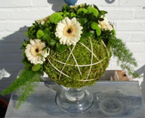 Great spring bulbs, from Assen / Paula / Flowers