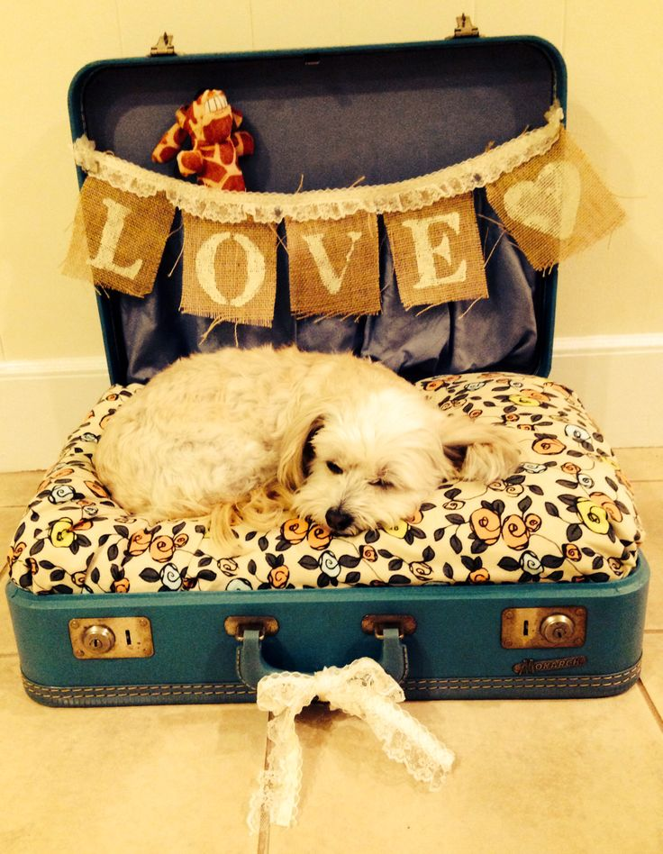 Lulu's suitcase dog bed! Made from a suitcase and banner used at our wedding.