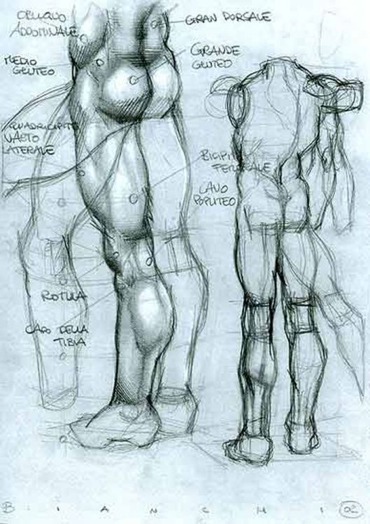 SIMONE BIANCHI - ANATOMICAL DRAWINGS