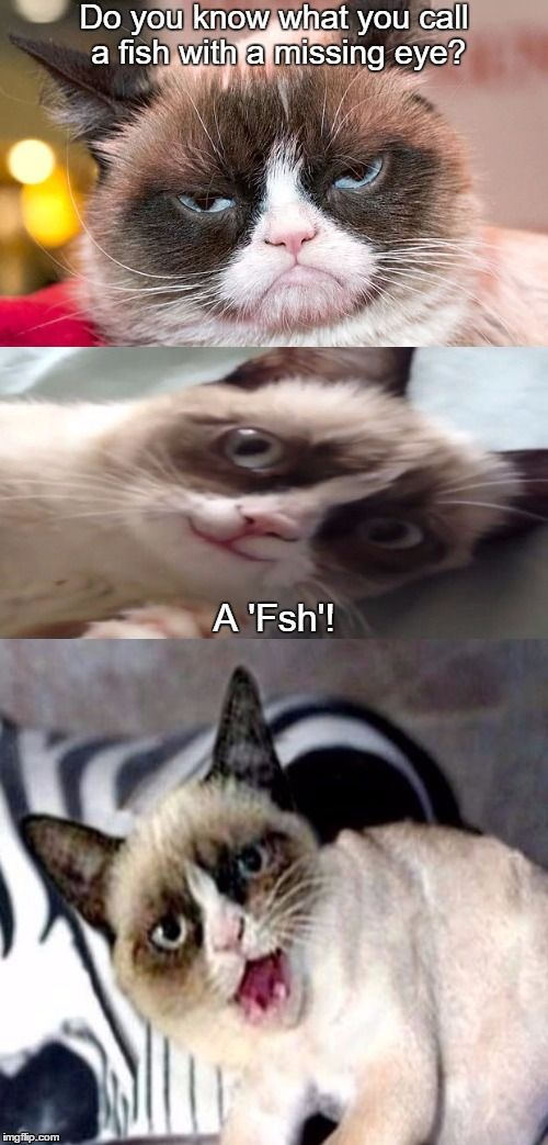 Bad Pun Grumpy Cat  | Do you know what you call a fish with a missing eye? A 'Fsh'! | image tagged in bad pun grumpy cat,grumpy cat | made w/ Imgflip meme maker