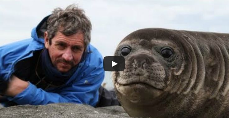 This Photographer Wanted Closeups Of A Baby Seal. What Happened Next Left Me Absolutely Speechless.