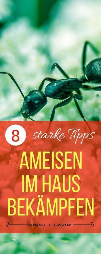 Más de 25 ideas increíbles sobre Ameisen im haus bekämpfen en - was hilft gegen ameisen in der k che