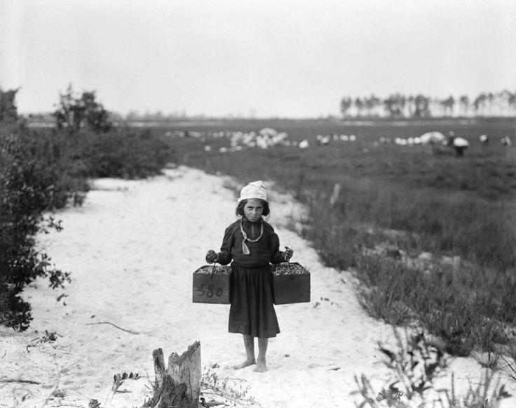Μεταφορά βατόμουρων στο Νιου Τζέρσεϊ (1910)