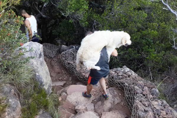 Heroes carry 40kg dog down mountain - Western Cape | IOL News | IOL.co.za