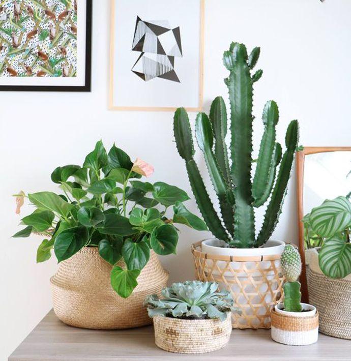 Ben jij ook zo'n enorme planten killer? Met de volgende hacks kun je toch de gezelligheid in huis halen, zonder weer een plant om zeep te helpen..