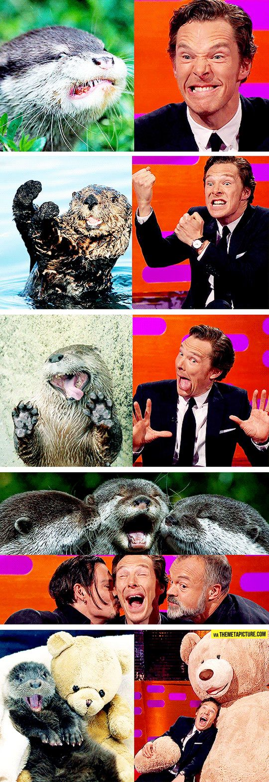 Benedict Cumberbatch Reenacts Otter Memes...omg I love it hahahaha