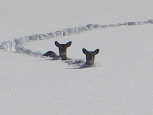 Record February Snow In North Carolina, Franklinton NC 2009 #snow