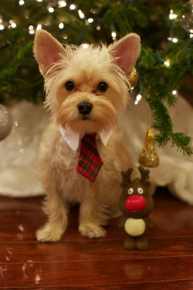 want to wear a tie for christmas eve like this guy hope my mom