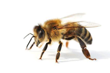 Bienenstich Natron hilft wirkungsvoll zur Behandlung vom Bienenstich.