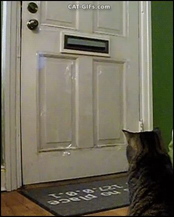 """CAT GIF • Amazing Cat gets mail. GOTCHA! Mine. So funny. """"Everyday around lunch time our cat,  The Baron,  waits for USPS to drop off  his toy for the day. Sometimes we actually get to read our letters."""""""