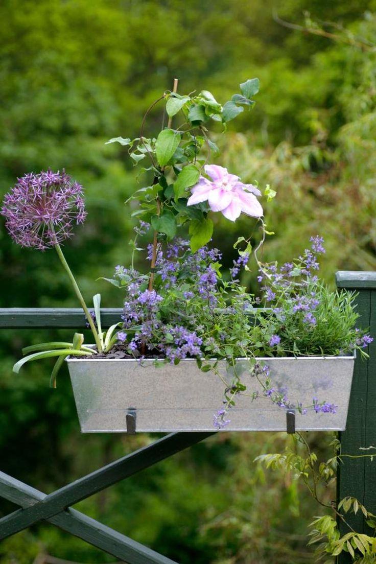 fleurs grimpantes annuelles pour jardiniere. Black Bedroom Furniture Sets. Home Design Ideas