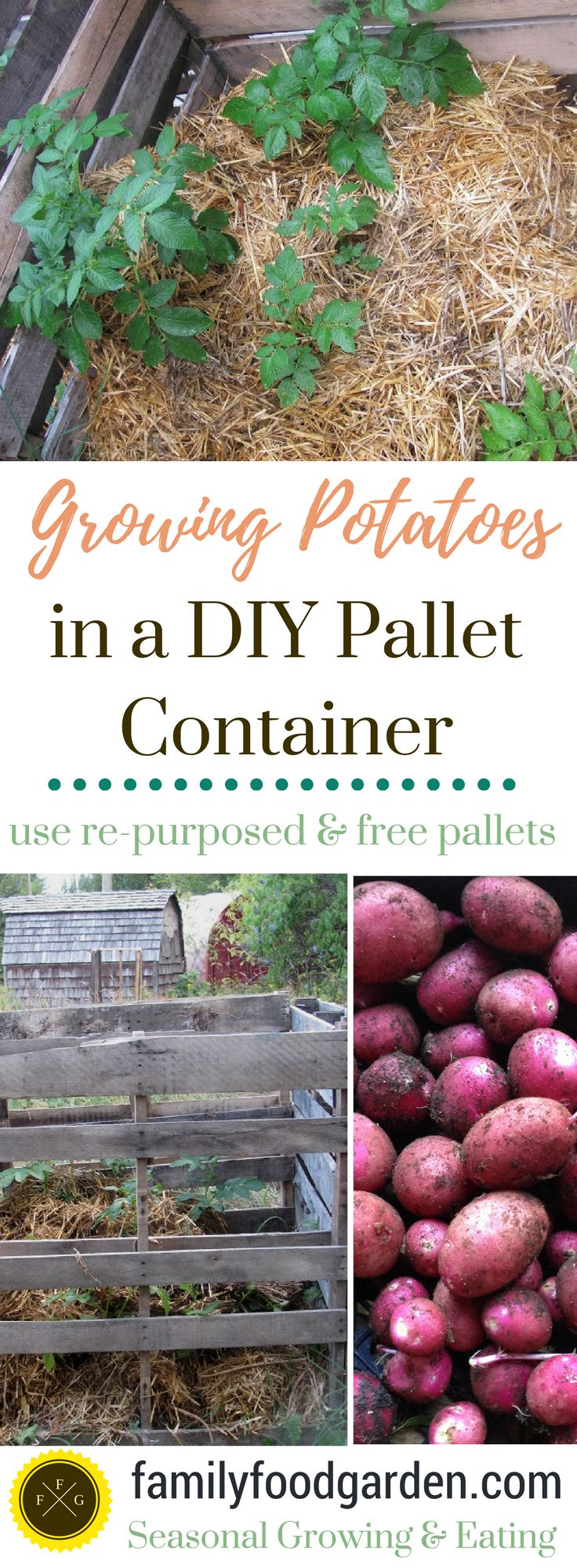 Food garden pictures - Grow Potatoes In A Pallet Container