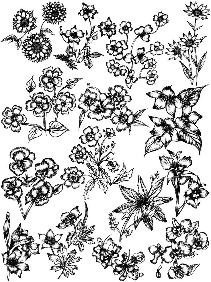 Hand Drawn Sketch Flowers Vector and Brush Pack