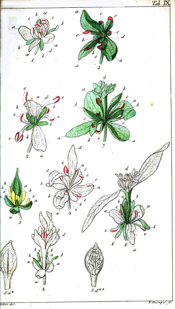 Vintage Flower Diagram Schematic Diagrams Botanical Tree Ring Vintageprintable Poppy Roots Electrical Work Wiring U2022 Hot Air Balloon