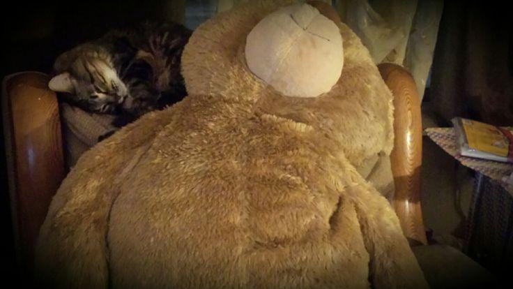 Cuddles with Teddy❤