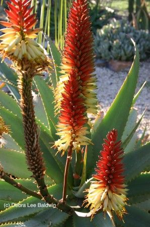 148 Best Plants That I Want Images On Pinterest Garden