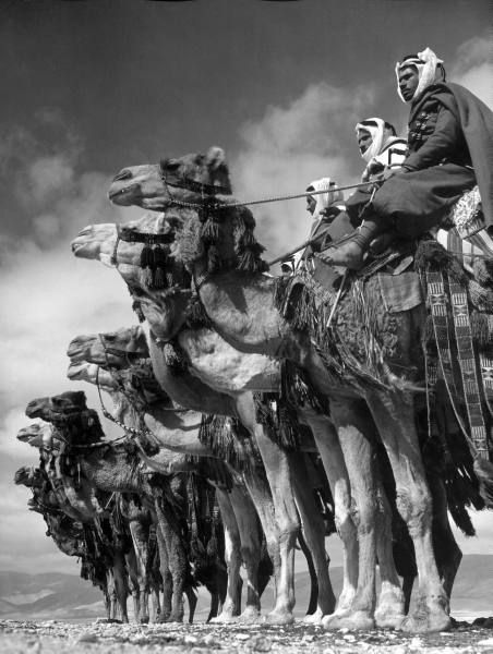 Bedouin camel cavalry in Dmeir, Syria. Photographed by Margaret Bourke-White, 1940