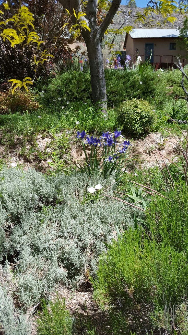 151 best images about xeriscape ideas on pinterest for Xeriscape images