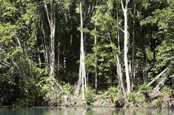 Image of Howard Springs