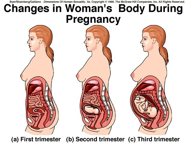 Stomach Organs During Pregnancy Maternity Pinterest