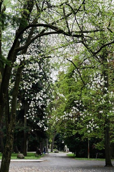 Park in Gorlice by Maciej Zdun