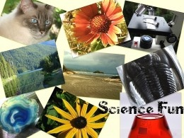 Great Science Games Websites For Kids - Fun and Educational