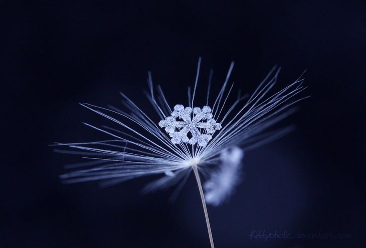 Frozen Beauty by Kittyoholic.deviantart.com. Yes, this is a real snowflake.