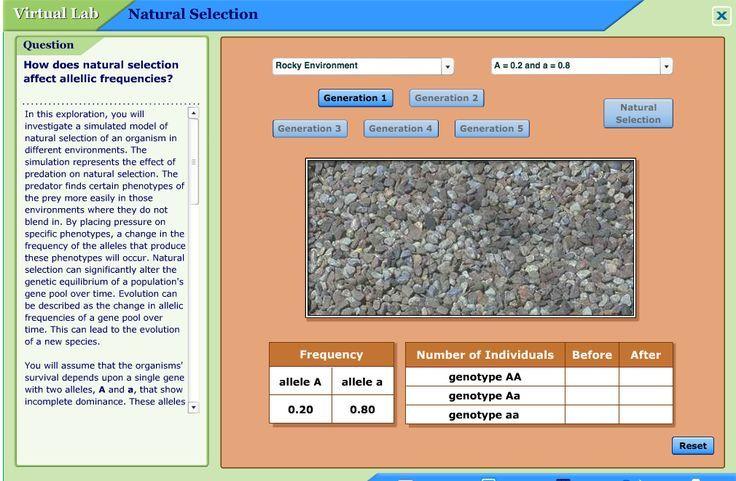 Mhhe Virtual Lab Natural Selection