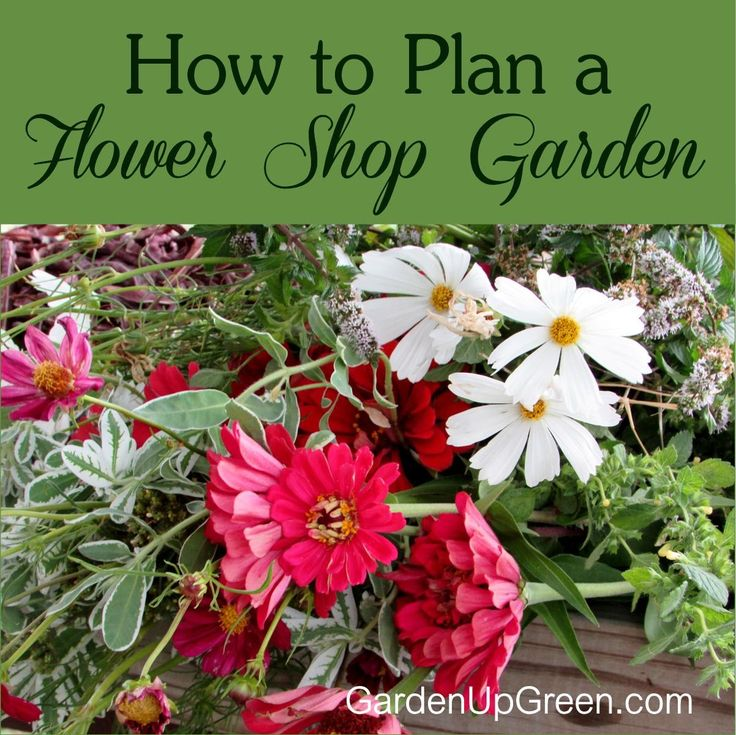 Learn How to Plan a Flower Shop Garden right where you live.  Fresh Cut flowers From Summer to Fall wouldn't that be amazing!