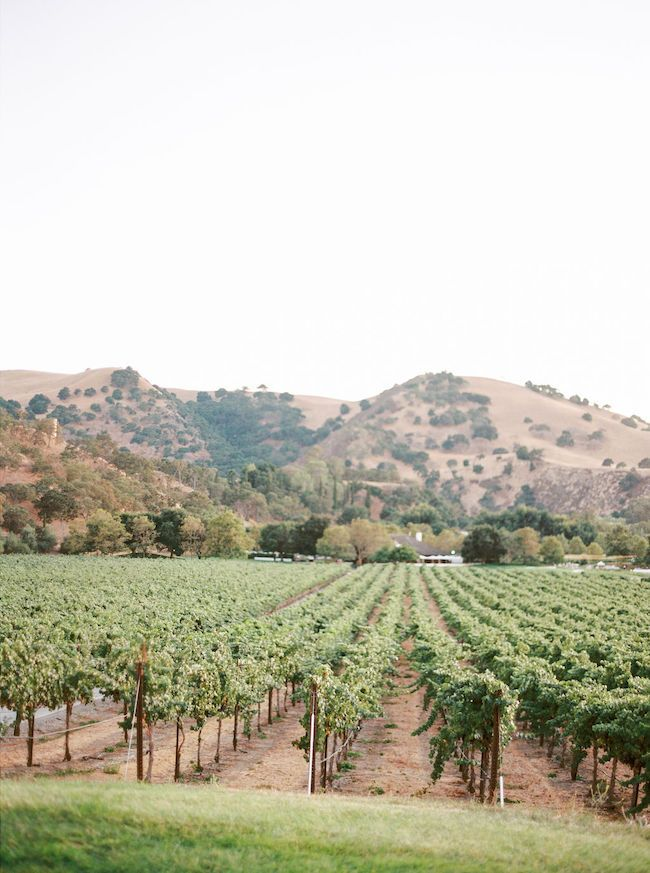 Northern California Vineyard Wedding With Tropical Details