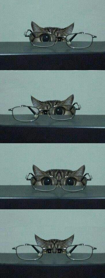 So cute! Kitty!