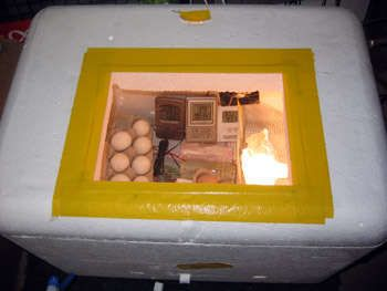 Cheap incubator, good clear instructions.