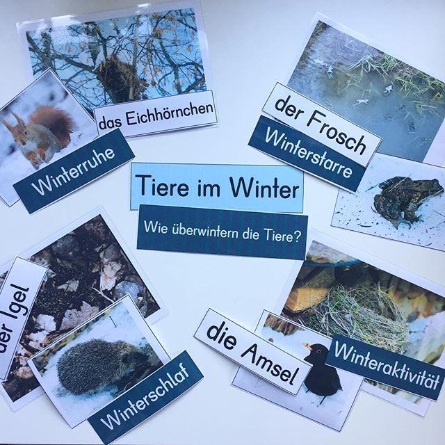 """Unser nächstes Thema im Sachunterricht """"Tiere im Winter"""". Nur noch ein paar Vorbereitungen.... dann ist alles fertig! #tiereimwinter #sachunterricht #ideenbörse #grundschule #grundschullehrerin #grundschulideen #froileinskunterbunt"""