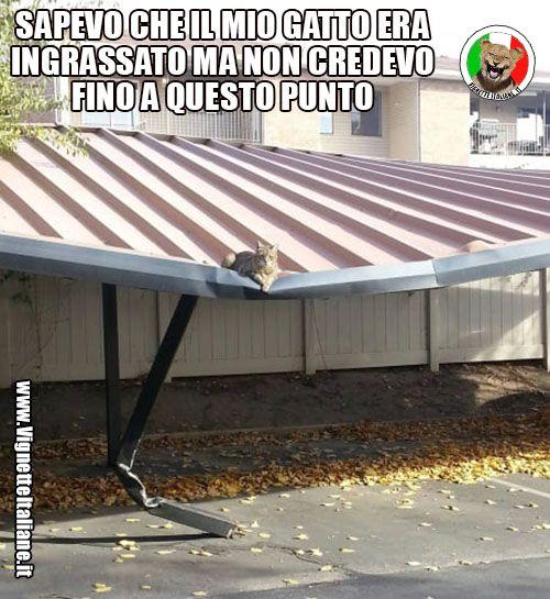 Clicca sull'immagine per visitare il sito. #Animali, #Gatti #Divertenti, #Funny, #Funnypics, #Humor, #Humour, #Immagini, #Immaginidivertenti, #Italiane, #Lol, #Meme, #Memeita, #Memeitaliani, #Memes, #Memesita, #Memesitaliani, #Pics, #Umorismo, #Vignette, #VignetteitalianeIt