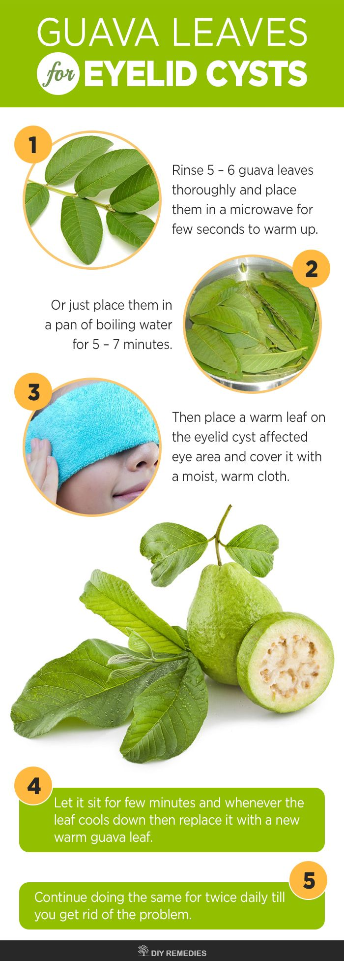 Guava Leaves To Get Rid Of Eyelid Cysts Guava Leaves Have Antiseptic And  Anti