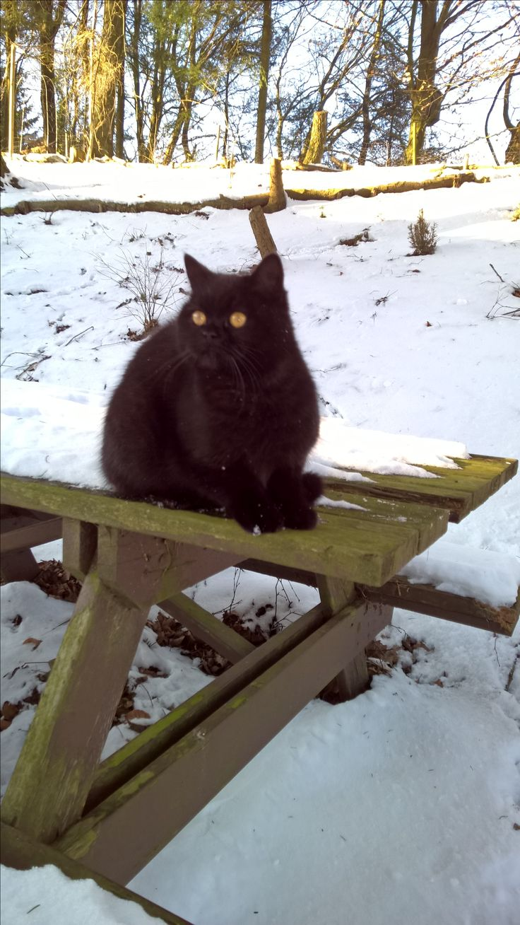 Halv perser og halv huskat. O'Malley hedder den smukke sorte dame.