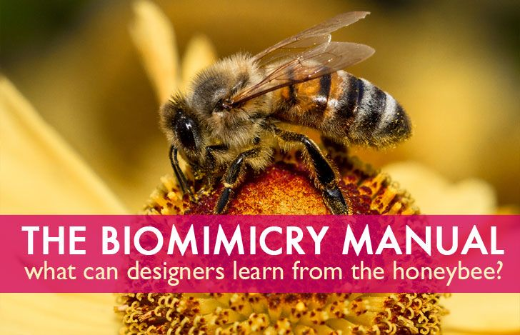 The Biomimicry Manual: What can the Honeybee Teach Designers About Insulation…